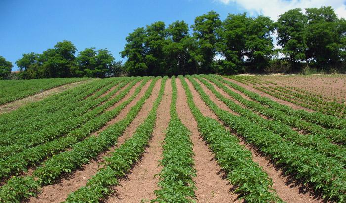 campo pomodoro