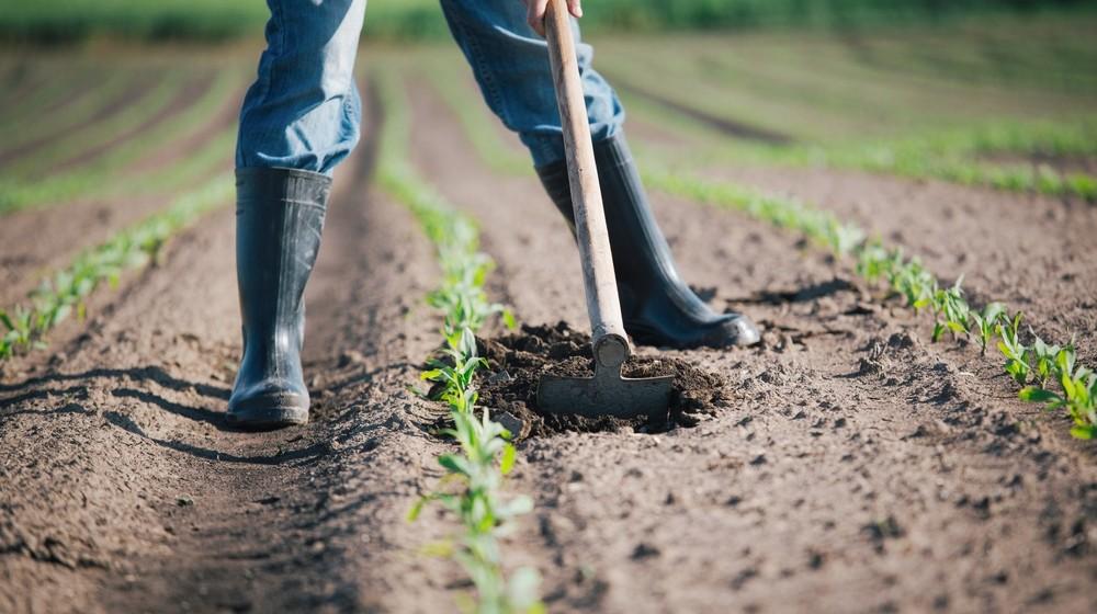 agricoltura-clima-1000x560